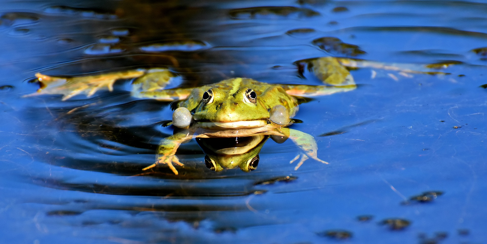 Image Of Frog On Water